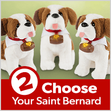 Step 2: Choose Your Saint Bernard