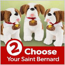 Step 2: Choose Your Saint Bernard