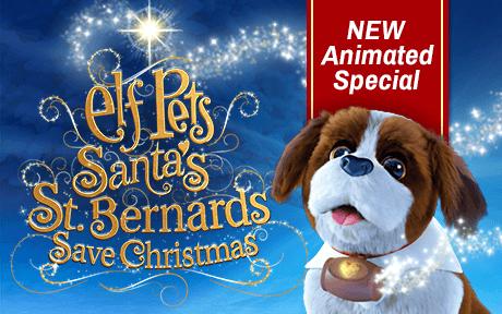 Saint Bernard DVD Special