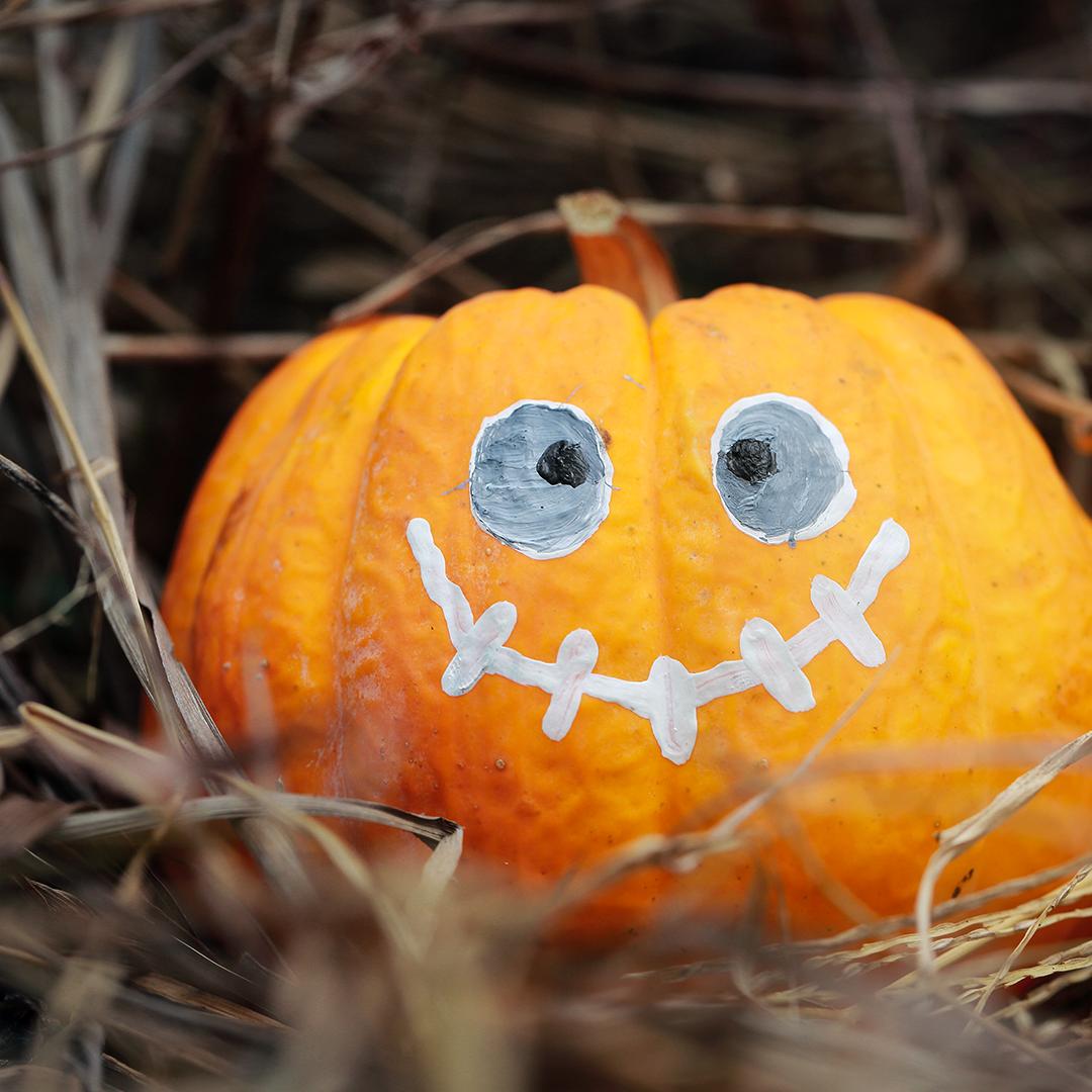 Paint a Pumpkin Craft